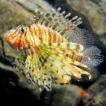 adler_okeanarium