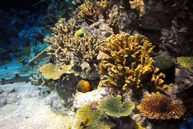 oceanarium_05