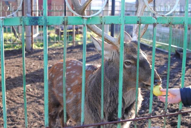 hvalynsk_zoo_15