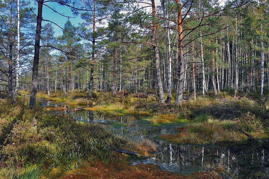nacionalny-park-kemeri_01