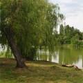 balakovo_prudy-bolnichy-gorodok_210