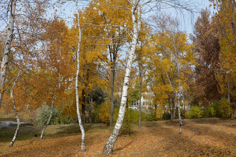 balakovo_prudy-bolnichy-gorodok_osen_01