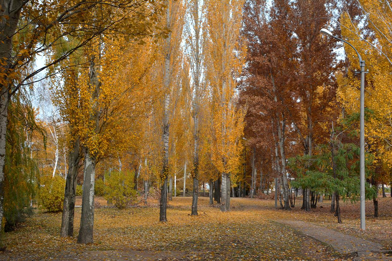 balakovo_prudy-bolnichy-gorodok_osen_07