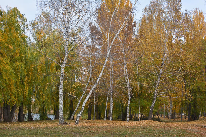 balakovo_prudy-bolnichy-gorodok_osen_10