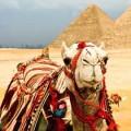 pochemu-egipet_210