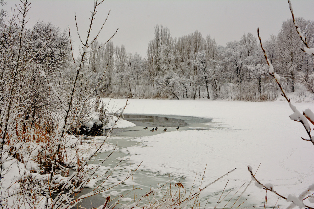 balakovo_prudy-zima_02