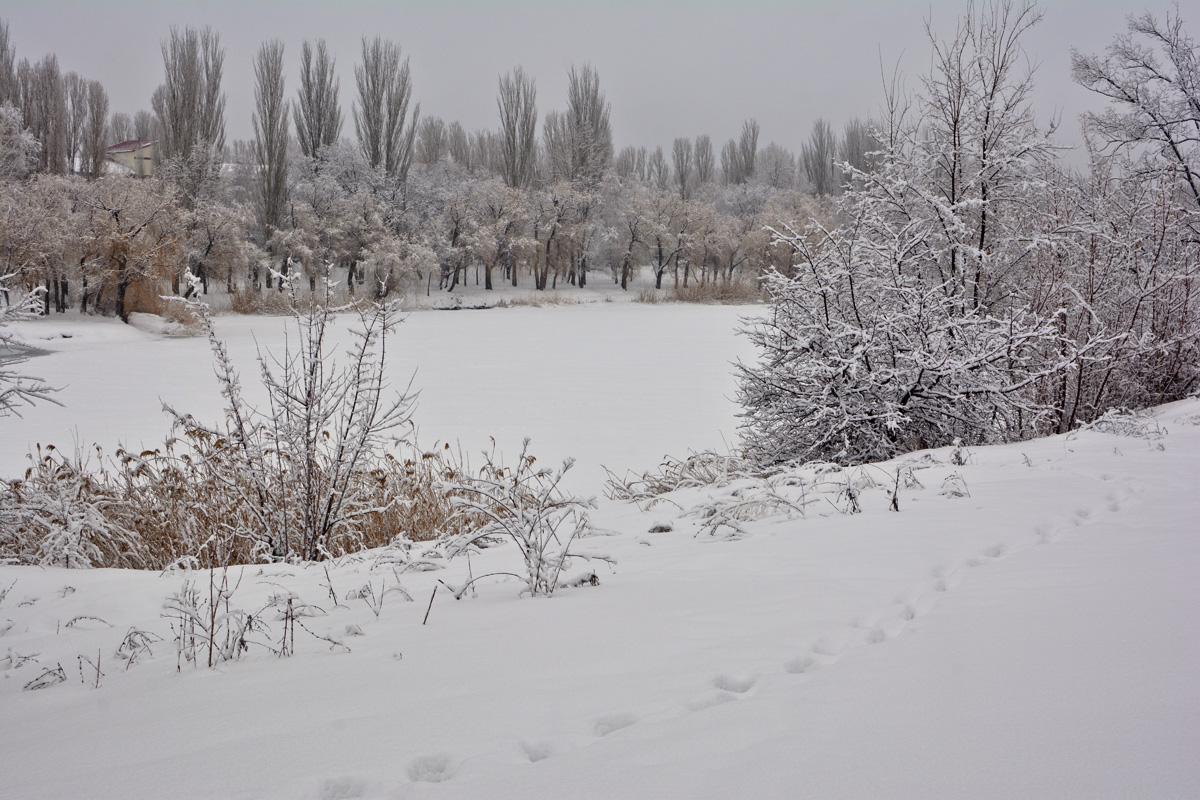 balakovo_prudy-zima_07