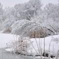 balakovo_prudy-zima_210