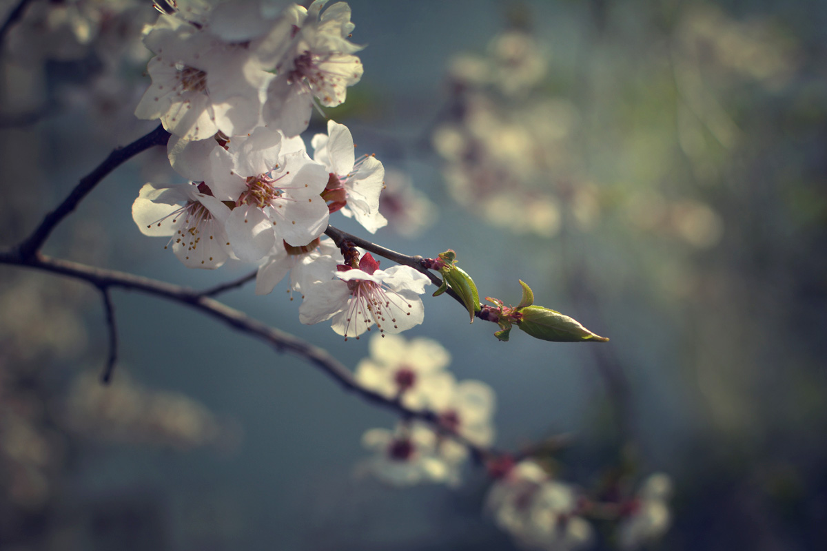 y_demina_april-16_04