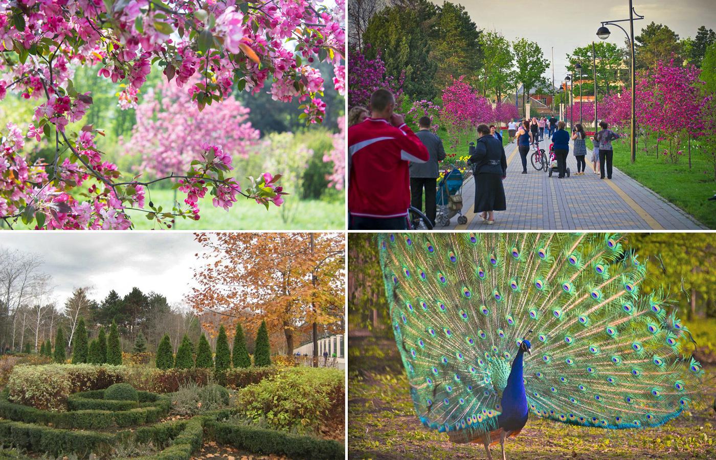 Краснодарский ботанический сад