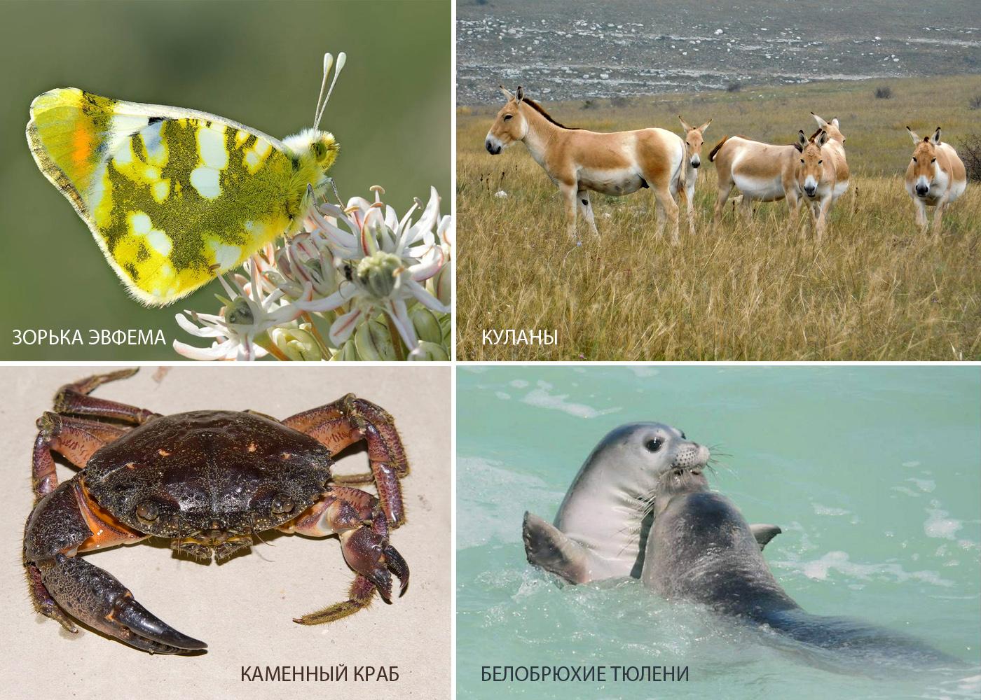Животный мир  национального парка«Тарханкутский».