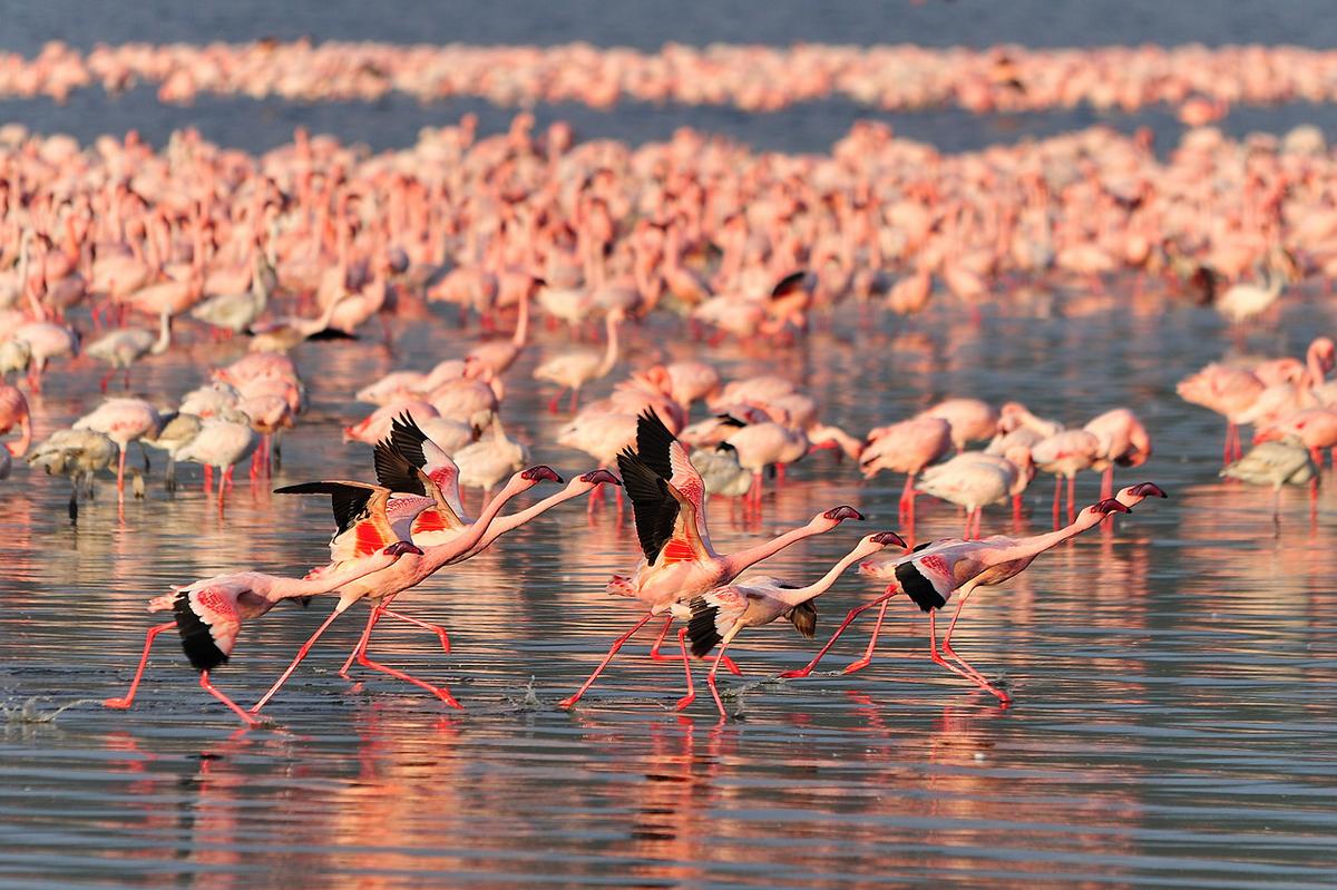 Остров розовых фламинго - Накуру